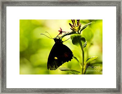 Framed Print featuring the photograph Upside Down by Leslie Leda