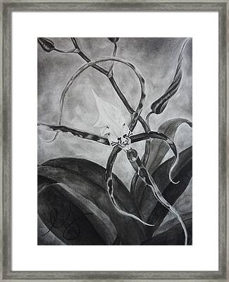 Upside-down Orchid Framed Print