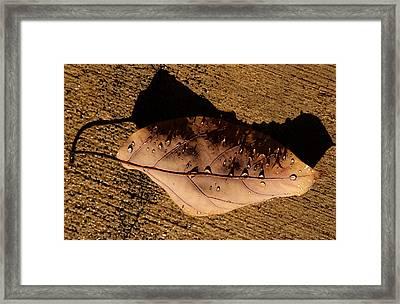 Upsidedown Brown Framed Print by Joe Schofield