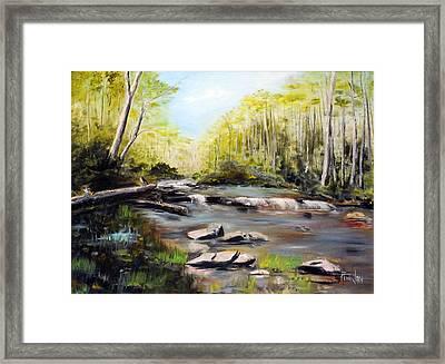 Upstate South Carolina Trout Stream Framed Print by Phil Burton