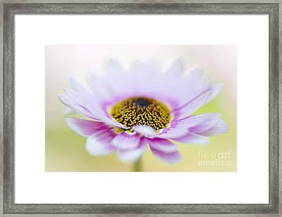 Upsy Daisy Framed Print