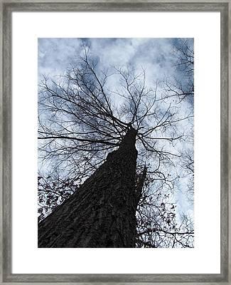 Upward Framed Print by Michele Bishop