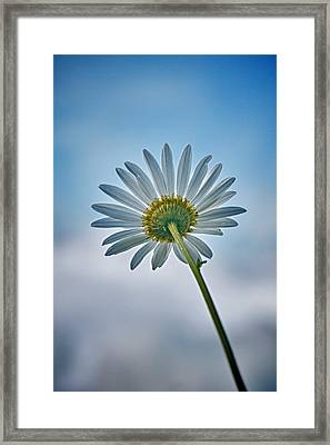 Upward Framed Print by Nathan Larson