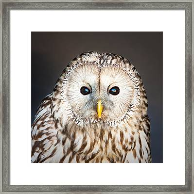 Ural Owl Framed Print by Tom Gowanlock