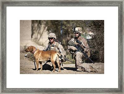 U.s. Marines And A Military Working Dog Framed Print by Stocktrek Images