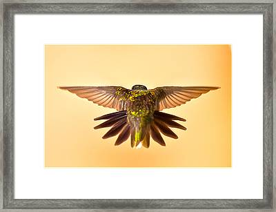 Framed Print featuring the photograph Usaf Hummingbirds Wings by Randall Branham
