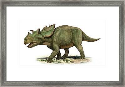 Utahceratops Gettyi, A Prehistoric Era Framed Print by Sergey Krasovskiy