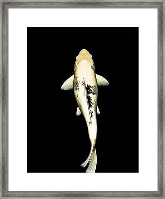Utsuri01 Framed Print