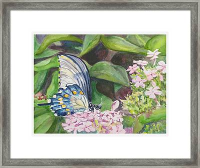 Vacition Butterfly Framed Print by Judy Loper