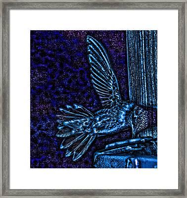 Vampire Hummingbird Sucks Blood At Night Framed Print