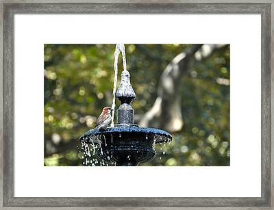 Van Vorst Fountain Framed Print by JAMART Photography