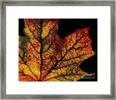 Vangogh's Autumn Maple Leaf Framed Print by Wingsdomain Art and Photography