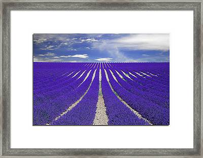 Vanishing Smell -- Lavender Framed Print by Nespyxel
