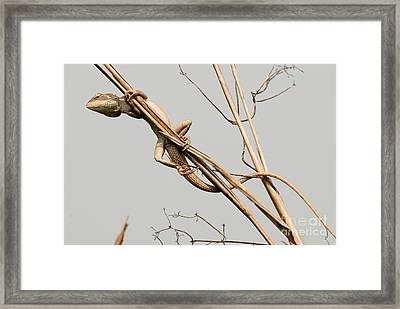Framed Print featuring the photograph Vantage Point by Fotosas Photography