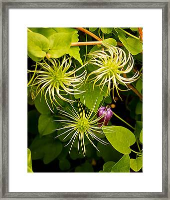 Variations Framed Print by Michael Putnam