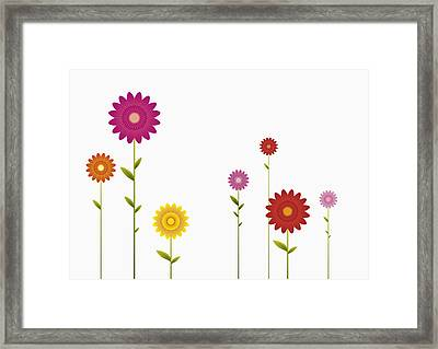 Various Colors And Sizes Of Gerbera Daisies In A Row Framed Print