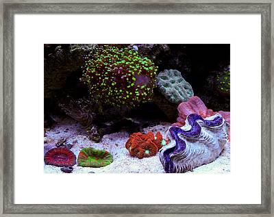 Various Corals Framed Print by Erik Hovind