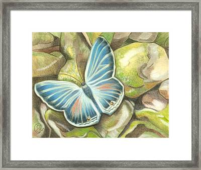 Velvet Blue Framed Print by Stephanie L Carr