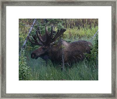 Framed Print featuring the photograph Velvet by Doug Lloyd