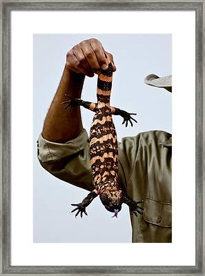 Venomous Lizard Aka Gila Monster Framed Print by LeeAnn McLaneGoetz McLaneGoetzStudioLLCcom