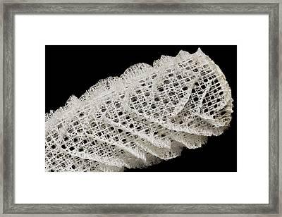 Venus's Flower Basket Sponge Skeleton Framed Print by Dirk Wiersma