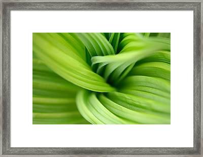 Veratrum Macro Framed Print