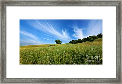 Verdant Fields Framed Print by Matt Tilghman