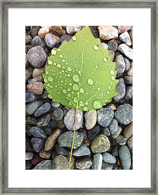 Vermont Leafs - Morning Dew Framed Print by Elijah Brook