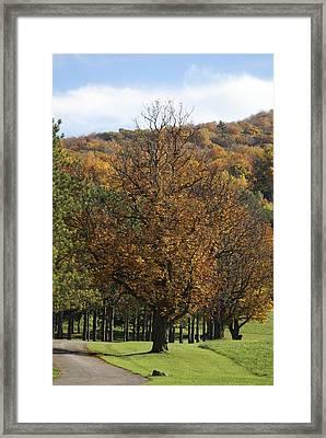 Vermont Path Framed Print by Margaret Steinmeyer