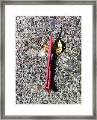 Vermont Red Leaf Curling Framed Print by Elijah Brook