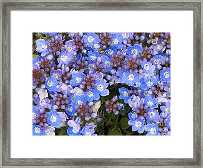 Framed Print featuring the photograph Veronica by Michele Penner