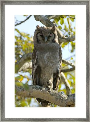 Verreauxs Eagle Owl, Bubo Lacteus, Or Framed Print by Paul Sutherland