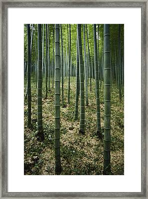 Vertical Picture Of Long Slender Green Framed Print by Luis Marden