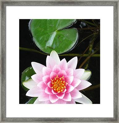 Vertical Water Lily Framed Print by Debbie Finley