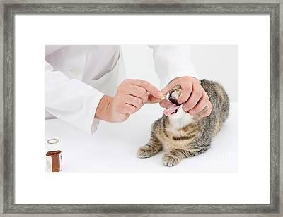 Vet And Kitten Framed Print