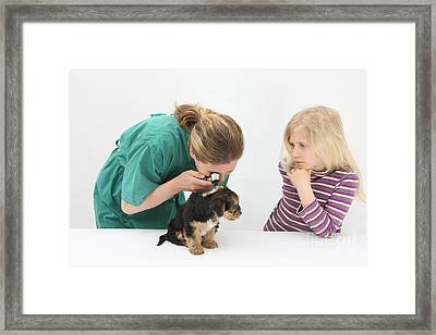 Vet Using An Otoscope To Examine A Pups Framed Print by Mark Taylor