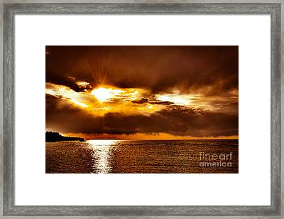 Vibrancy Framed Print