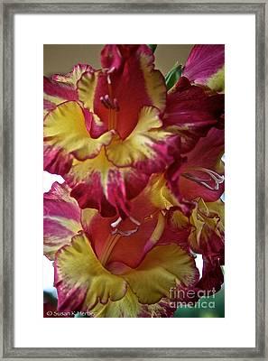 Vibrant Gladiolus Framed Print by Susan Herber