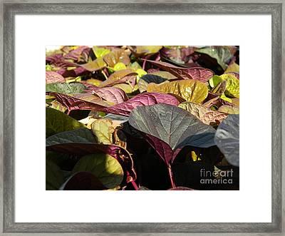 Vibrant Vines Framed Print