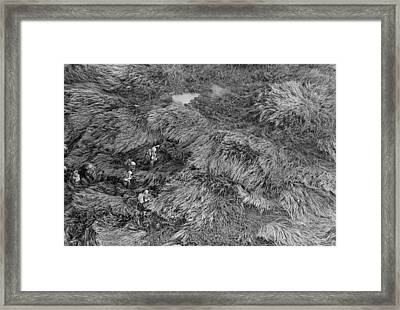 Vietnam War. Aerial View Of Us Marines Framed Print by Everett