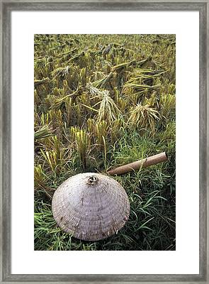 Vietnamese Conical Hat And Rice Cutting Framed Print