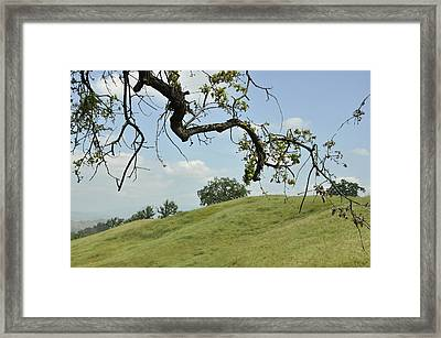 View From Under The Oak Framed Print by Sandy Fisher
