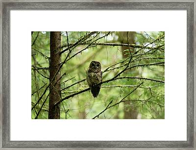 View Of A Northern Spotted Owl Framed Print by James P. Blair