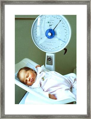 View Of A Premature Baby Being Weighed Framed Print by Mauro Fermariello