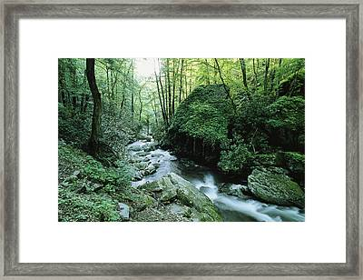 View Of Roaring Fork Creek Framed Print by George F. Mobley