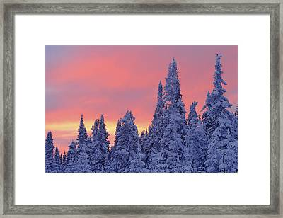 View Of Snow-covered Trees And Sky Framed Print by Yves Marcoux
