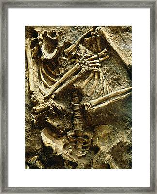 View Of The Skeleton Of A Neanderthal Framed Print