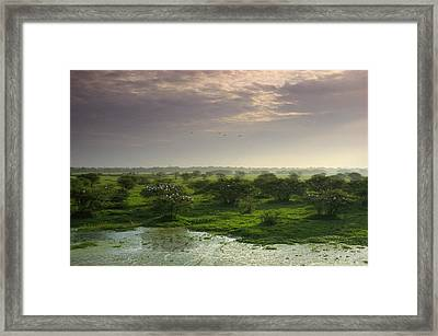 View Of Wetland Landscape With Openbill Framed Print by James P. Blair