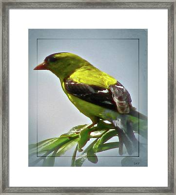 View The Layout Framed Print by Debra     Vatalaro