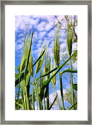 Viewpoint Of An Ant Framed Print by Kristin Elmquist